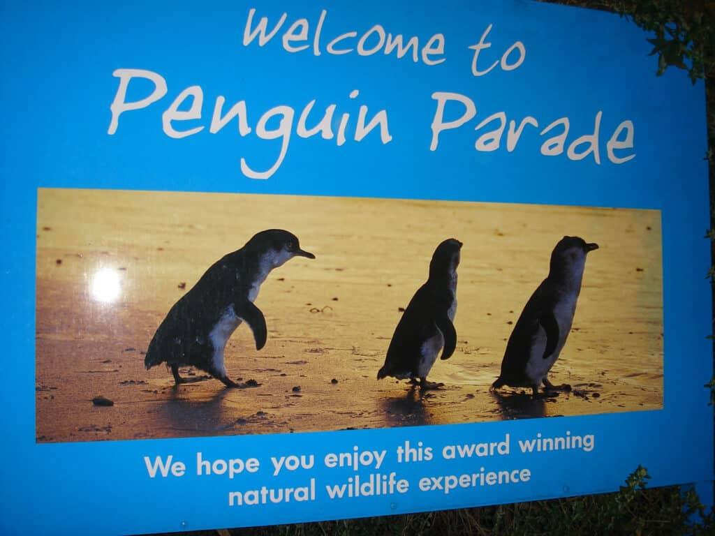 Parade des pingouins